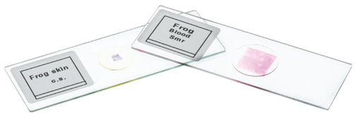 Microscope Slide Set - Basic Biology
