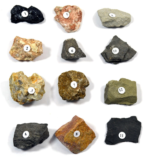 "Eisco Sedimentary Rocks Kit - Contains 12 specimens measuring approx. 1"" (3cm)"