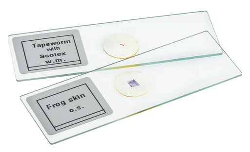 Microscope Slide Set Algae Beginner Set of 6 Slides