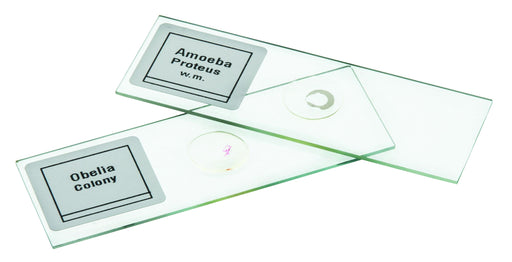 Microscope Slide Set Introductory Set No. III, Set of 25
