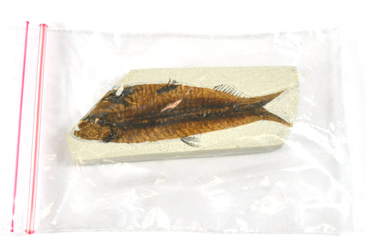 4x10cm Fish Fossil Replica, Mesozoic
