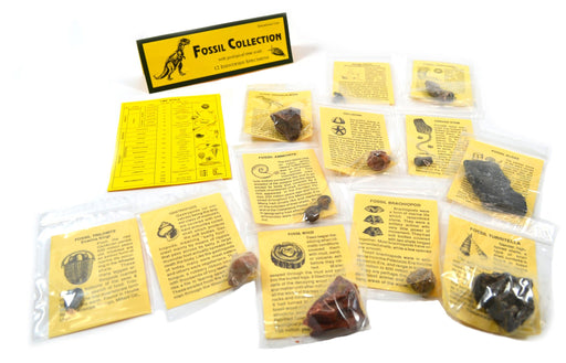 12 Piece Deluxe Fossil Collection - Includes 12 Samples, Information Cards and a Geological Timescale - Great For Introductory Fossil Study - Eisco Labs