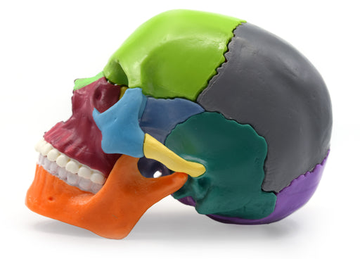 Didactic Mini Skull, Multicolored - 15 Pieces, Magnetic Mounting