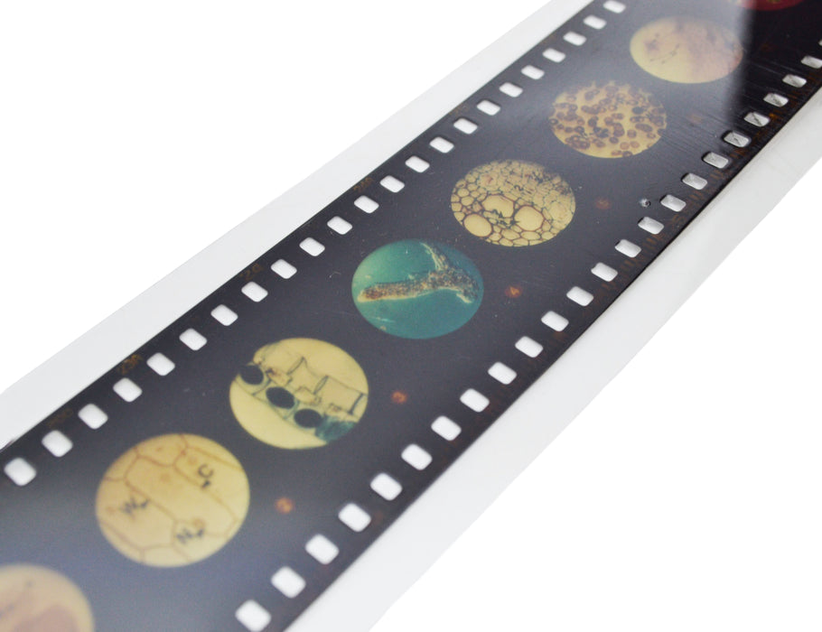 Multi-Slide Viewer Set - Includes One Slide Strip & Instructions - Easy To Use - Eisco Labs
