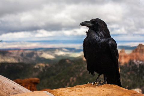 the story of a raven that brought sunshine to Earth