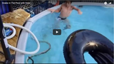 Snake in The Pool with Kids! (VIDEO)