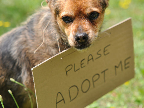 dogs for adoption save a dog now forhappypets