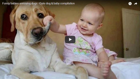 Funny Babies Annoying Dogs Compilation! (VIDEO)