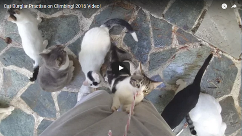 Cat Burglar Practise on Climbing! 2016 VIDEO