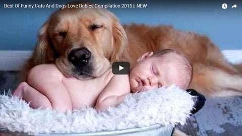 Best of Funny Cats and Dogs Love Babies Commpilation! (VIDEO)