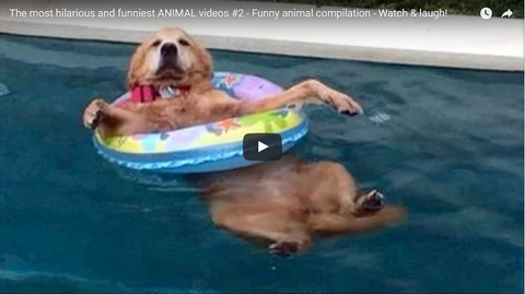 The most Hilarious and Funniest Animal Videos! 2016 Compilation!