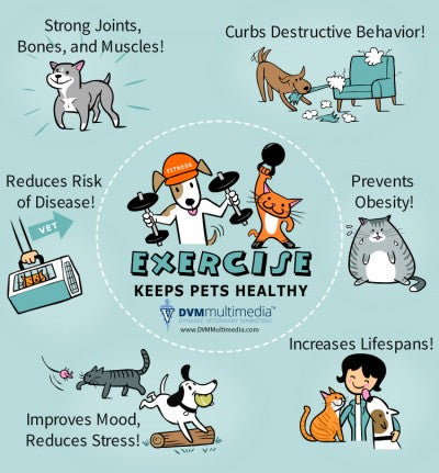 Pet Excercise Keeps Pets Healthy!