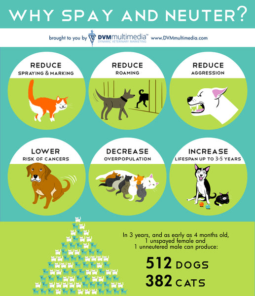 6 Reasons Why Spay and Neuter?