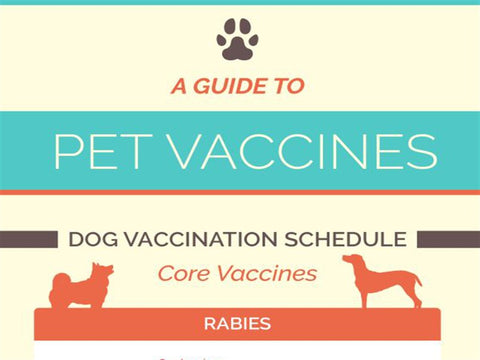 A Guide to Cat and Dog Vaccines