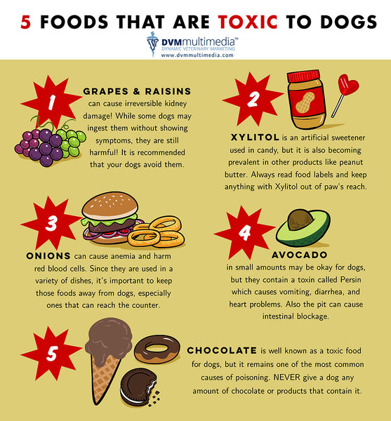 5 Toxic Foods for Dogs