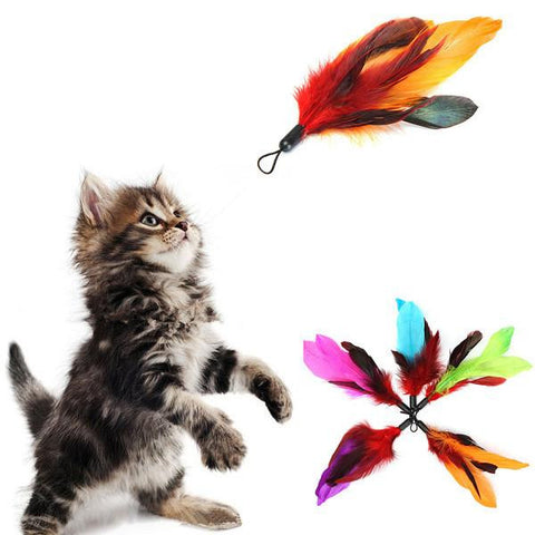 5 pieces Pet Cat Feather Teaser Refills - ForHappyPets.com