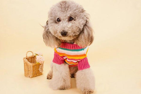 Amazing Pet Colorful Stripe Hooded Sweater - ForHappyPets.com