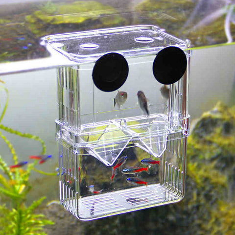 Amazing Hatchery Fish Incubator Isolation Box - ForHappyPets.com