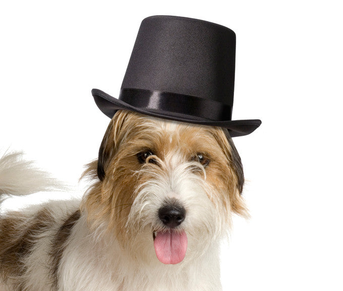 Top Hat for Dogs
