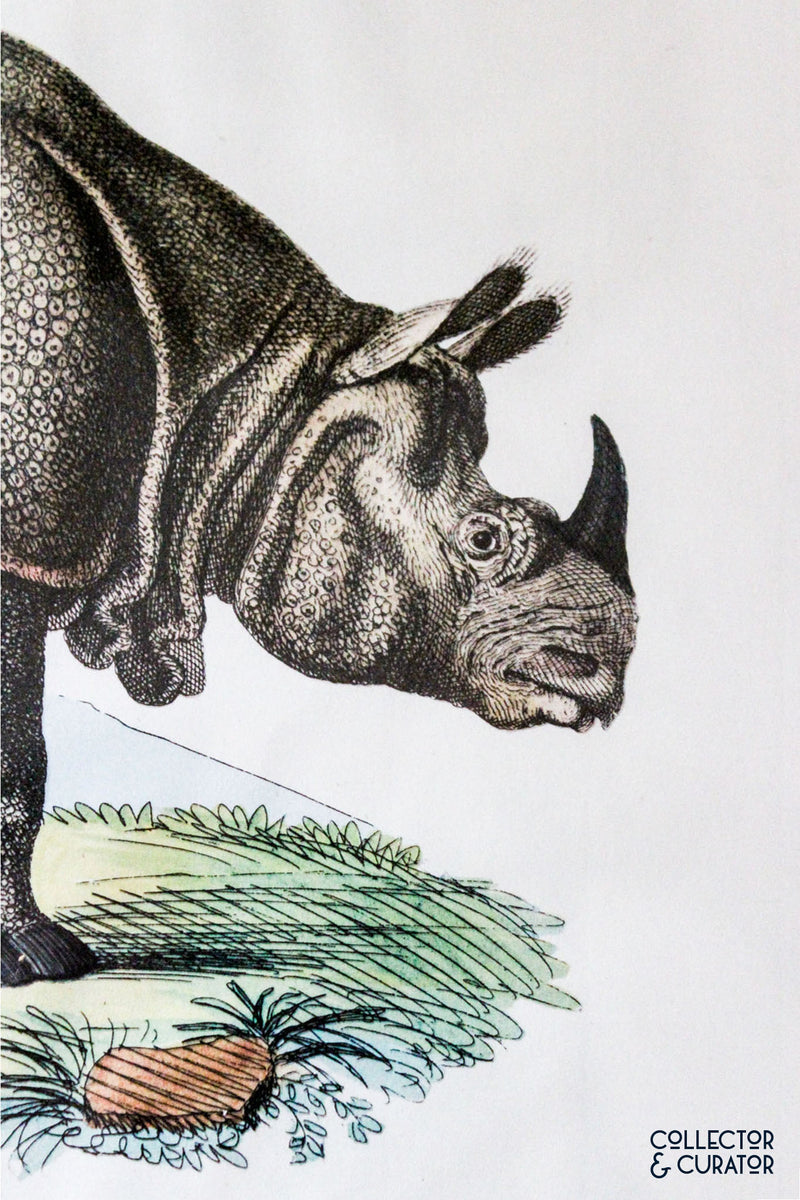 Rhinoceros Colored Lithograph - Collector & Curator