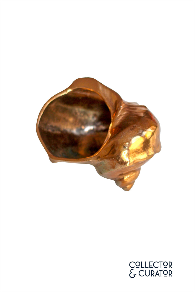 Gold Tone Shell - Collector & Curator