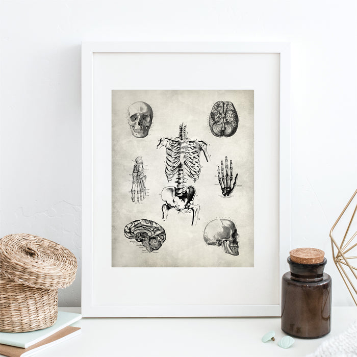 Anatomy Wall Art Skeleton Brain Hand Foot Skull