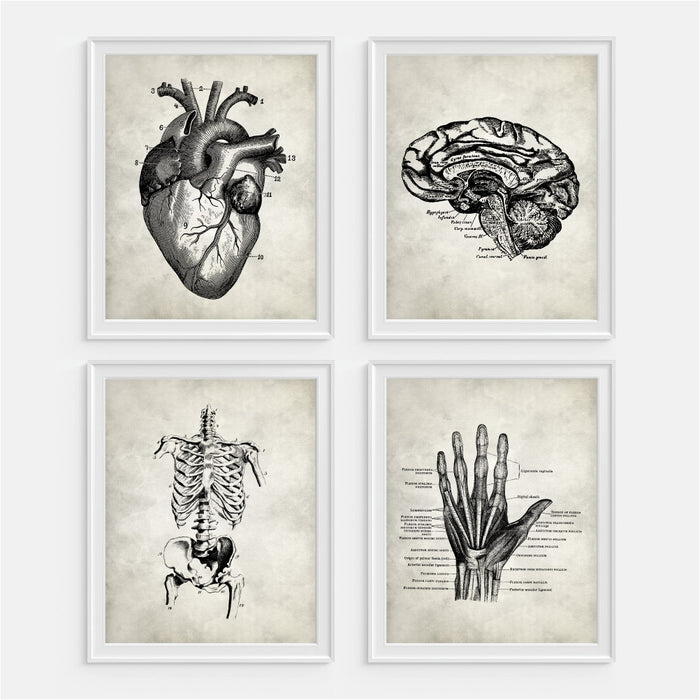 Anatomy Wall Art Heart Brain Skeleton Hand