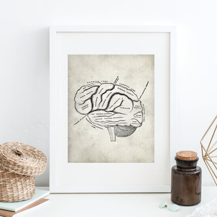 Medical Brain Wall Art