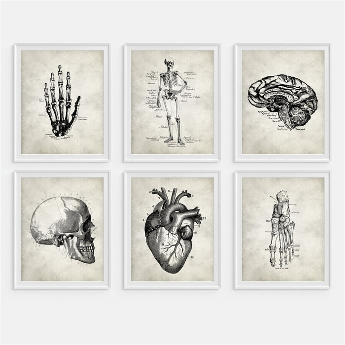 Anatomy Wall Art - Set of Six