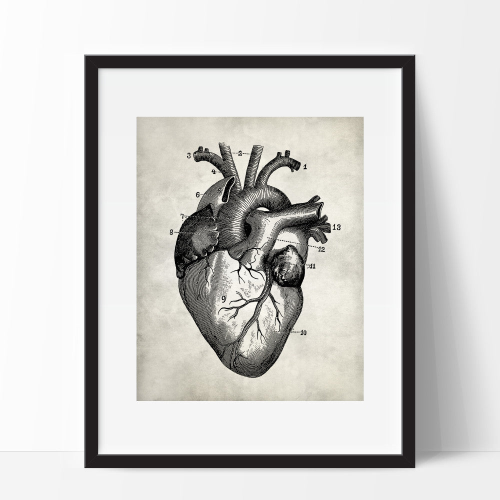 Anatomy Heart Art Print Human Anatomy
