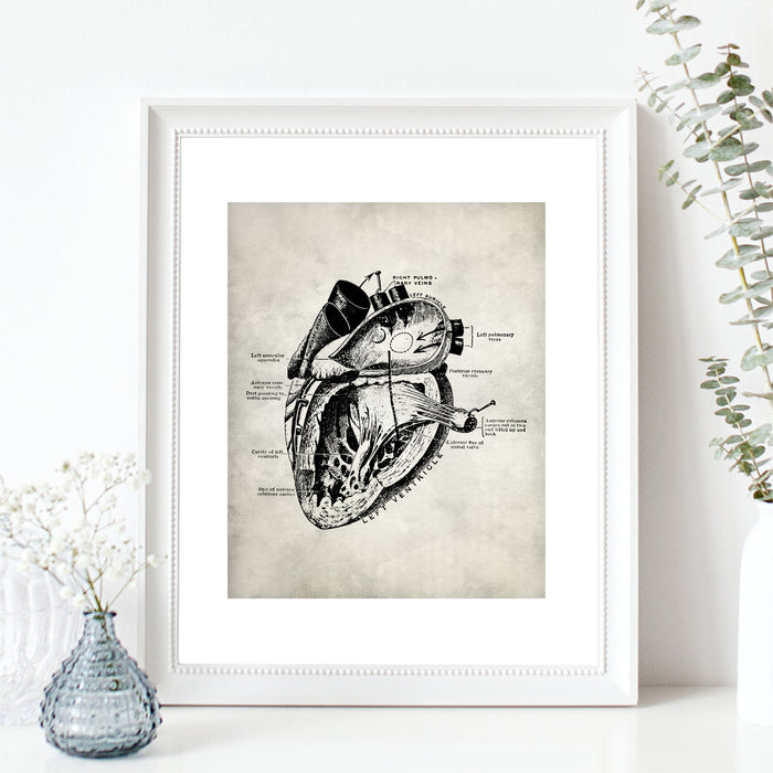 Medical Anatomy Heart Art