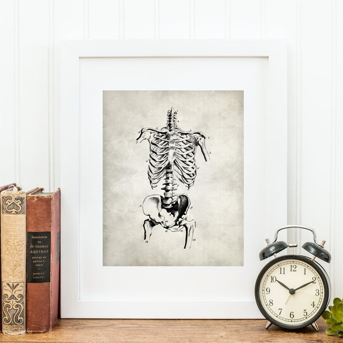 Medical Anatomy Skeletal Art Print