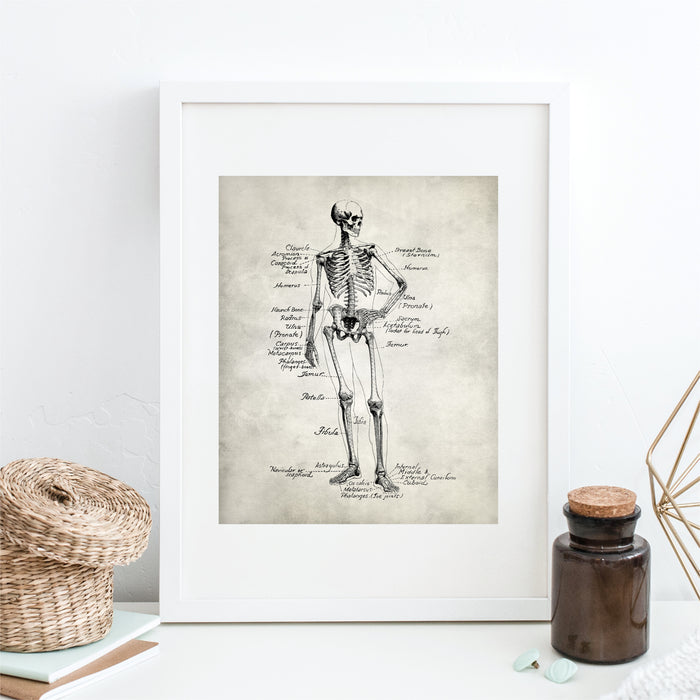 Skeleton Medical Anatomy Wall Art