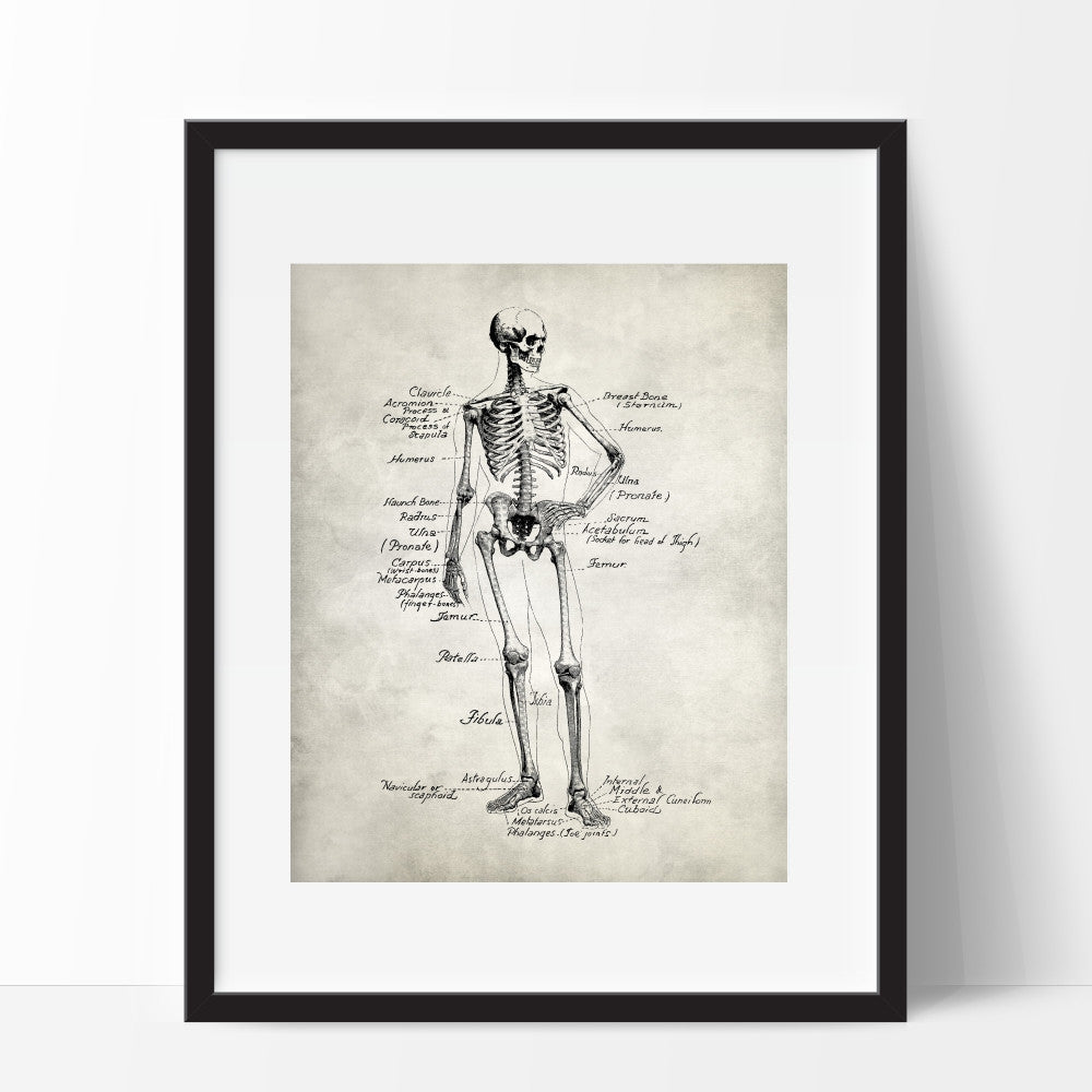 Skeleton Anatomy Art Print