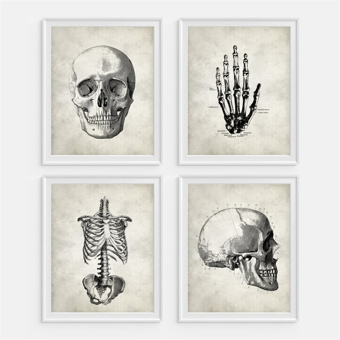 Anatomy Set of Four Art Prints Skull Hand Rib Cage