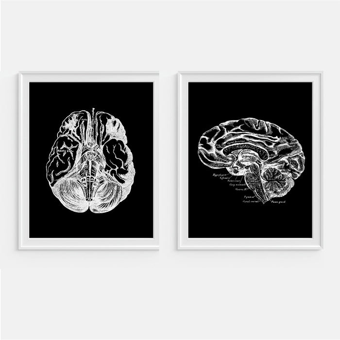 Brain Anatomy Wall Art - Black & White