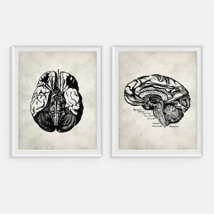 Brain Anatomy Wall Art