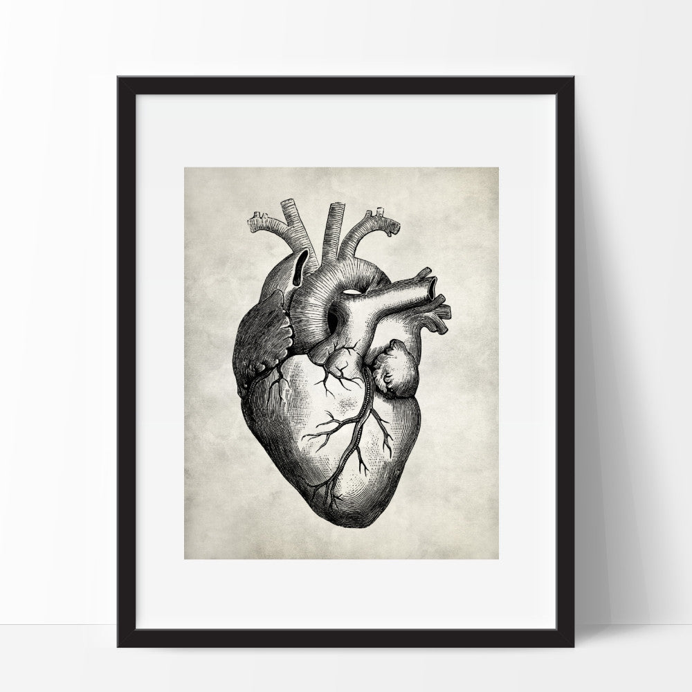 Anatomy Heart Medical Wall Art