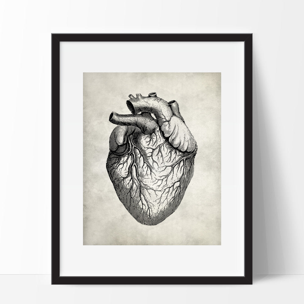 Medical Anatomy Heart Wall Art