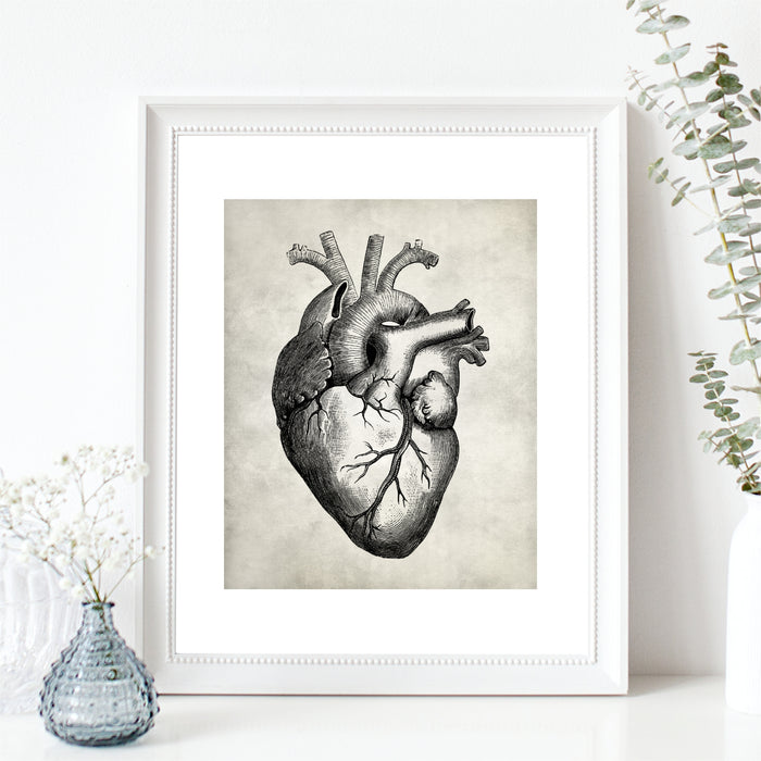 Anatomy Wall Art Heart Print