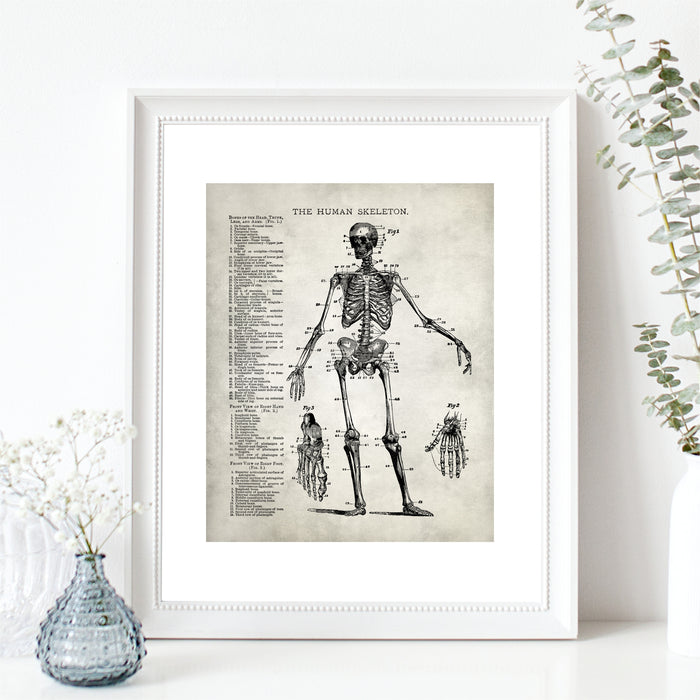 Skeleton Human Anatomy Wall Art