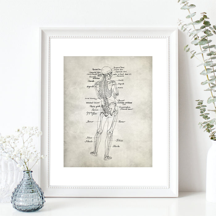 Detailed Full Body Anatomy Wall Art