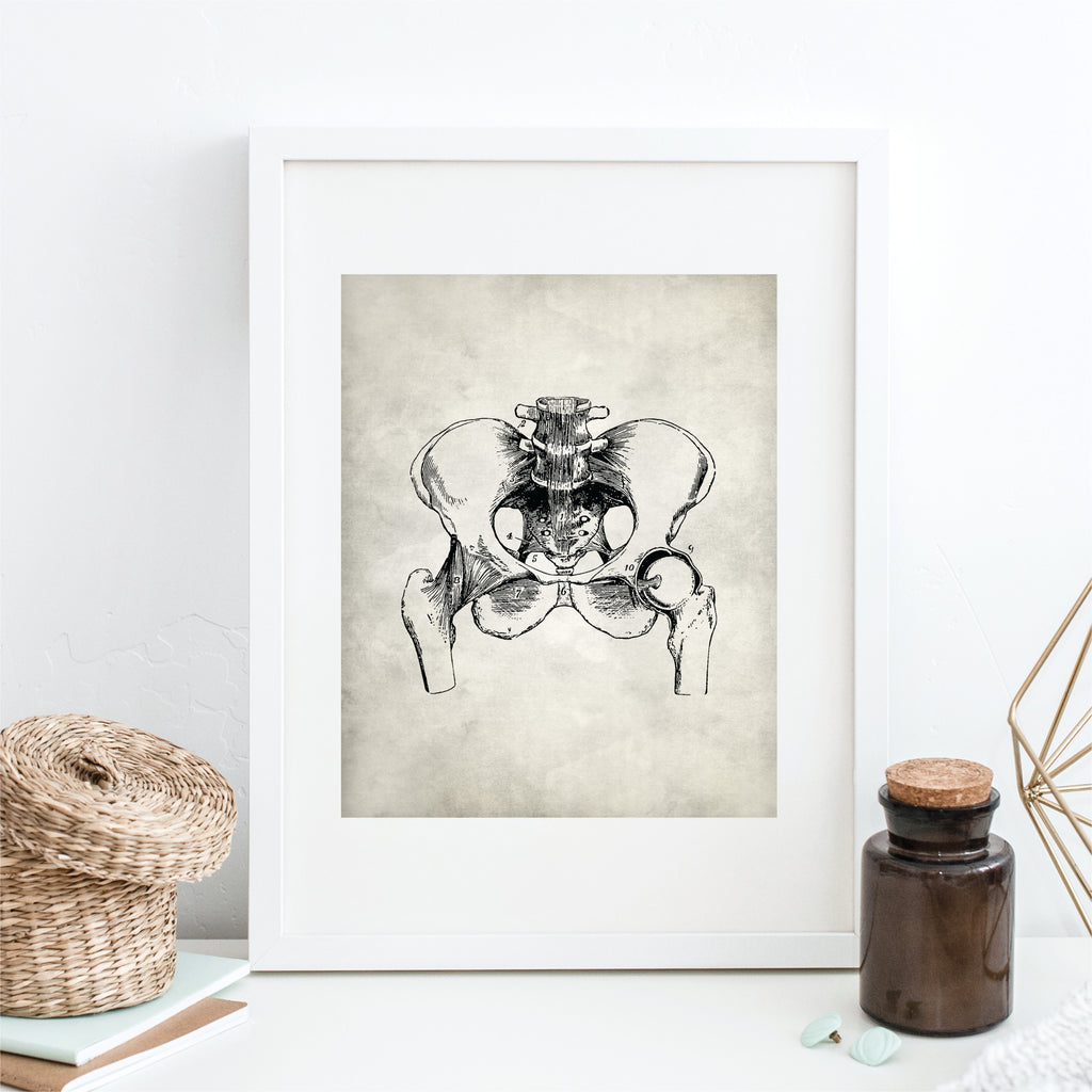 Anatomy Pelvis Wall Art – Picturality