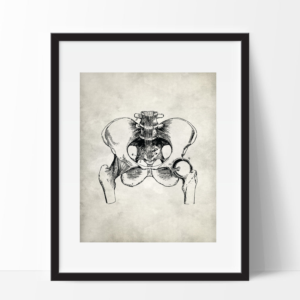 Pelvis Wall Art Anatomy