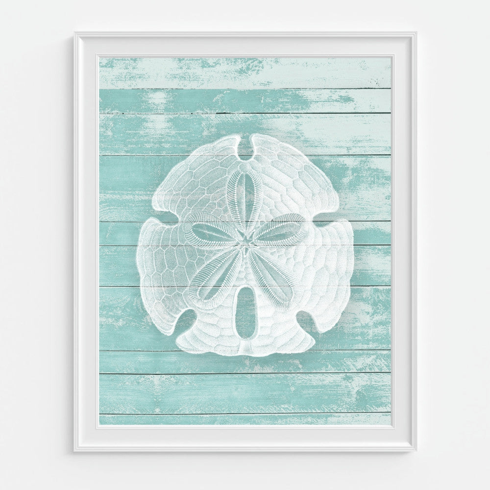 Sand Dollar Art Print - Vintage Reproduction