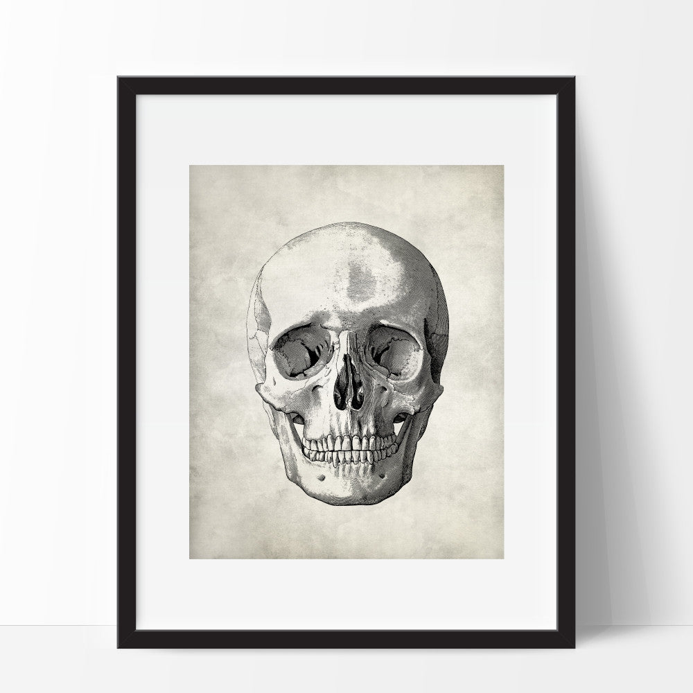 Anatomy Medical Skull Wall Art