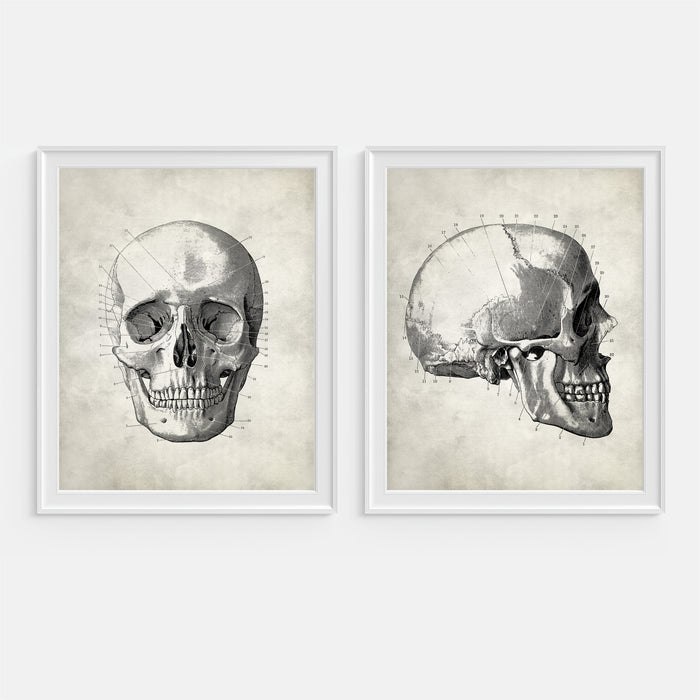 Skull Human Anatomy Wall Art Set of Two Prints