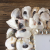 Oyster Shell Frames - By the Sea Beach Decor