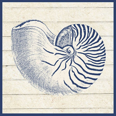 Sand Treasures Nautilus Print - By the Sea Beach Decor