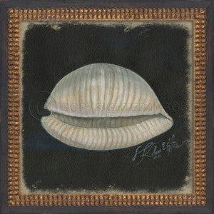 Vintage Seashell 2 Framed Art - By the Sea Beach Decor